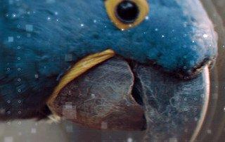 Arara Azul, Parque das Aves, EcoMúsica Araras, Fábio Caramuru - Foto de Otavio Dias