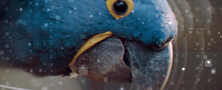 Fábio Caramuru lança videoclipe EcoMúsica Araras, gravado no Parque das Aves